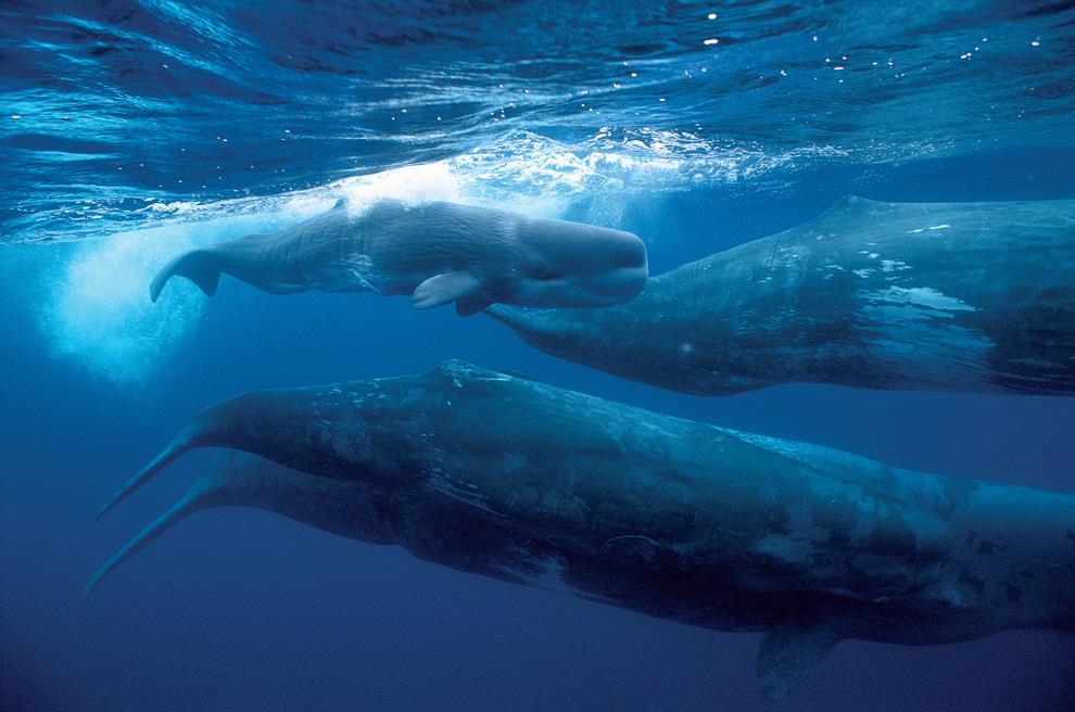 контроль осуществляется можно ли увидеть китов на тенерифе фото, фото девушек