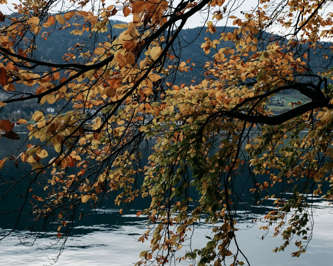 DSCF0516.herbstfarben spätherbst autumncolours salzburgerland