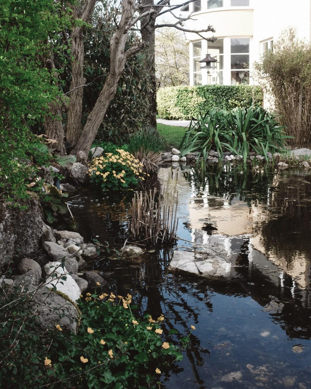 inastil, Frühlingsgarten, Teich, Magnolien, Frühlingsblüher, Lachs, Spargelrezept, Mangosalsa, Lowcarb, leichtes Abendessen, Ü50Blogger-4