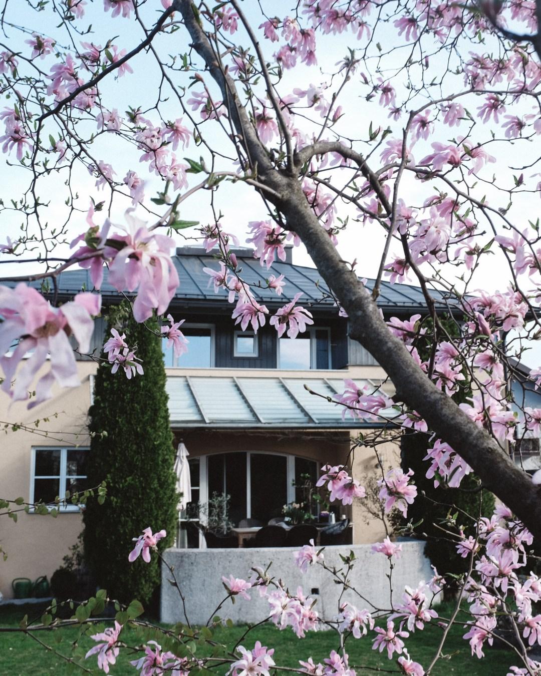 inastil, Frühlingsgarten, Teich, Magnolien, Frühlingsblüher, Lachs, Spargelrezept, Mangosalsa, Lowcarb, leichtes Abendessen, Ü50Blogger-5