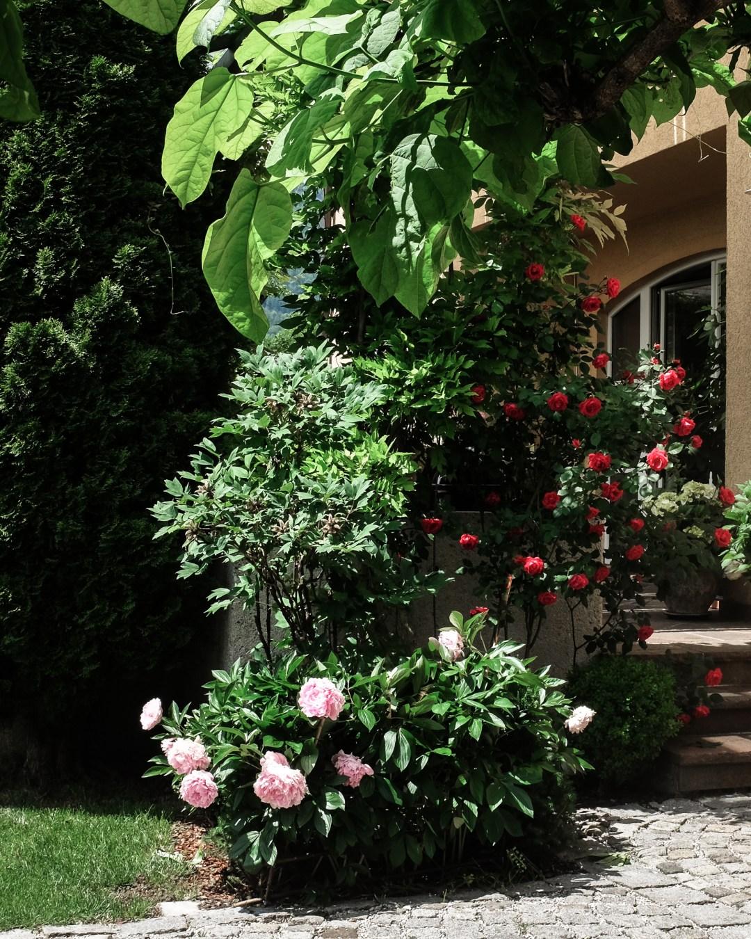 inastil, Ü50Blogger, mein schöner Garten, Sommergarten, Grillen, bestes Grillhähnchen, Sommertisch, toskanisches Platthuhn Rezept, outdoorliving, Rosen, Gartenblicke-18
