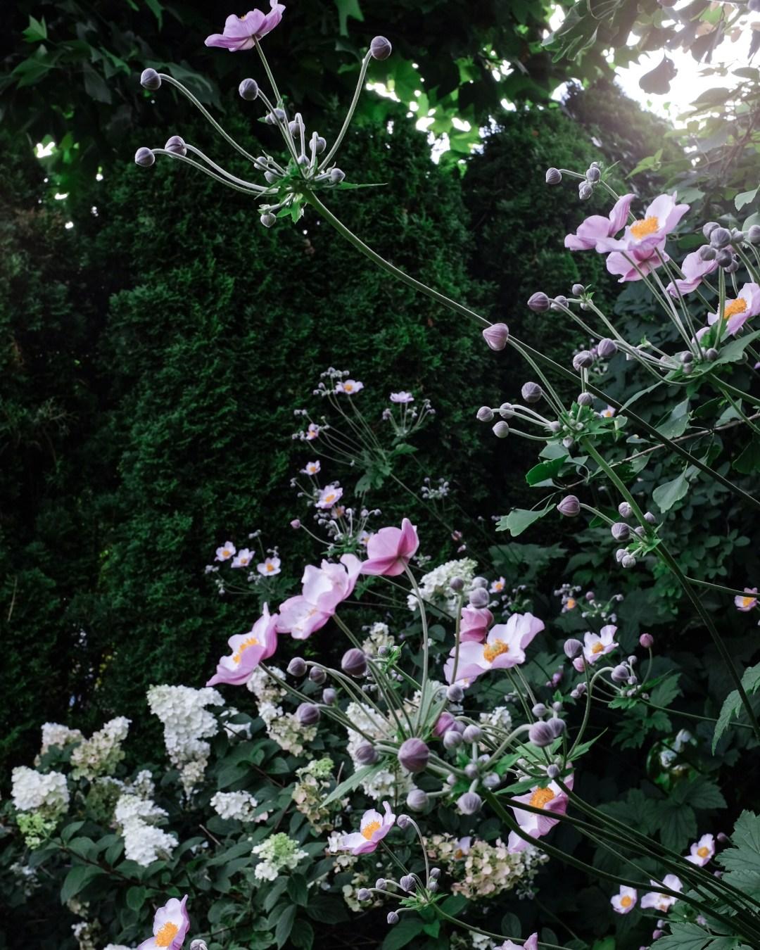 inastil, tomaten, feigen, mein Garten, erste Ernte, Gartenfrüchte, Sommerabend, Nektarinenkuchn, Sommerzeit, Ü50Blogger, Rezept-5