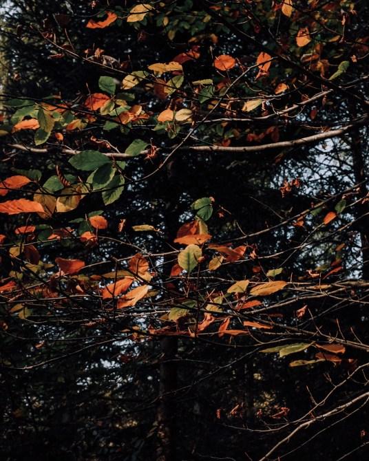 Inastil, Herbstinspiration, Herbst, Schokobrownie, Karamell-Schoko-Brownie, Cozy, Interior, Herbstblumen, Herbstdekoration, Backen, Natur, Waldspaziergang-18