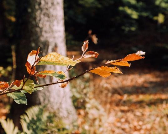 Inastil, Herbstinspiration, Herbst, Schokobrownie, Karamell-Schoko-Brownie, Cozy, Interior, Herbstblumen, Herbstdekoration, Backen, Natur, Waldspaziergang-9
