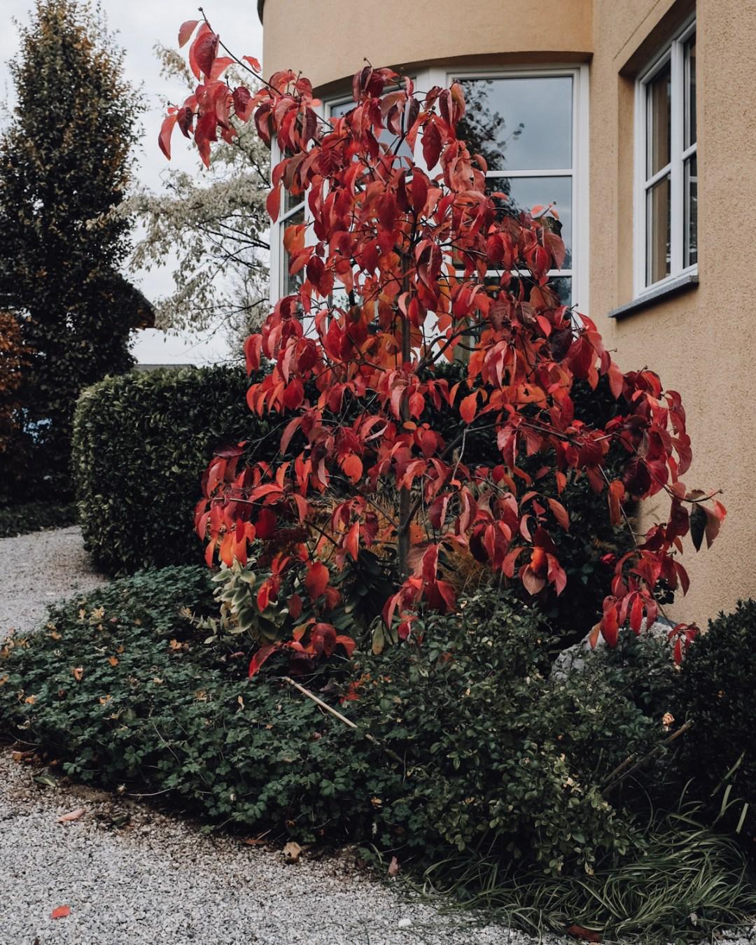 Inastil, Novemberstimmung, Garten, Beleuchtung, ZirbenLüfter, Lampen, Stimmungslicht, Interieur, Herbststimmung,_-2