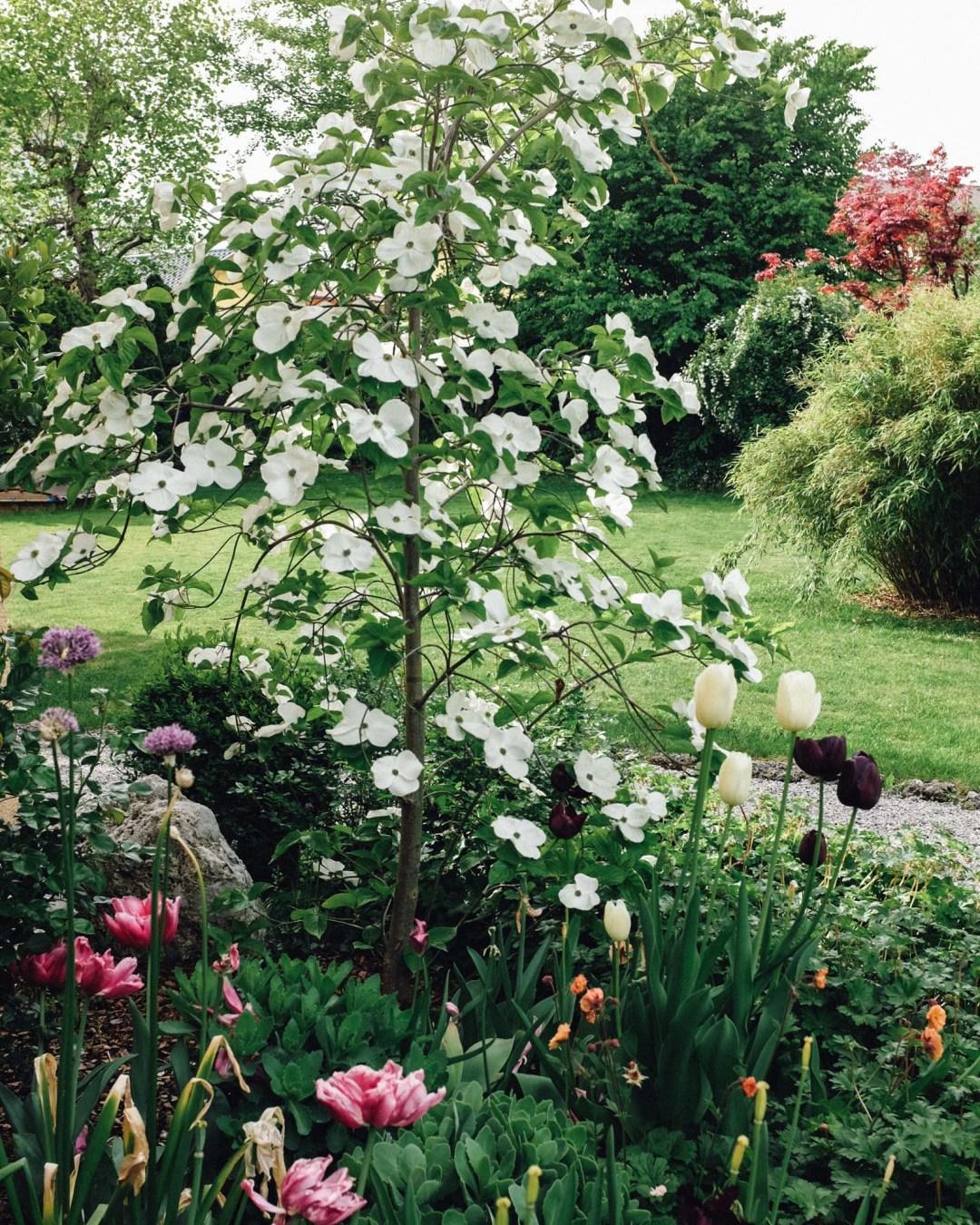 inastil, garten, blumen, rhabarbertarte, rhabarberkuchen, Spireen, Frühlingsblueten, meingarten, tarte, backen, gartendesign, gartenideen, ue50blog, gartendesign, gartenmoebel