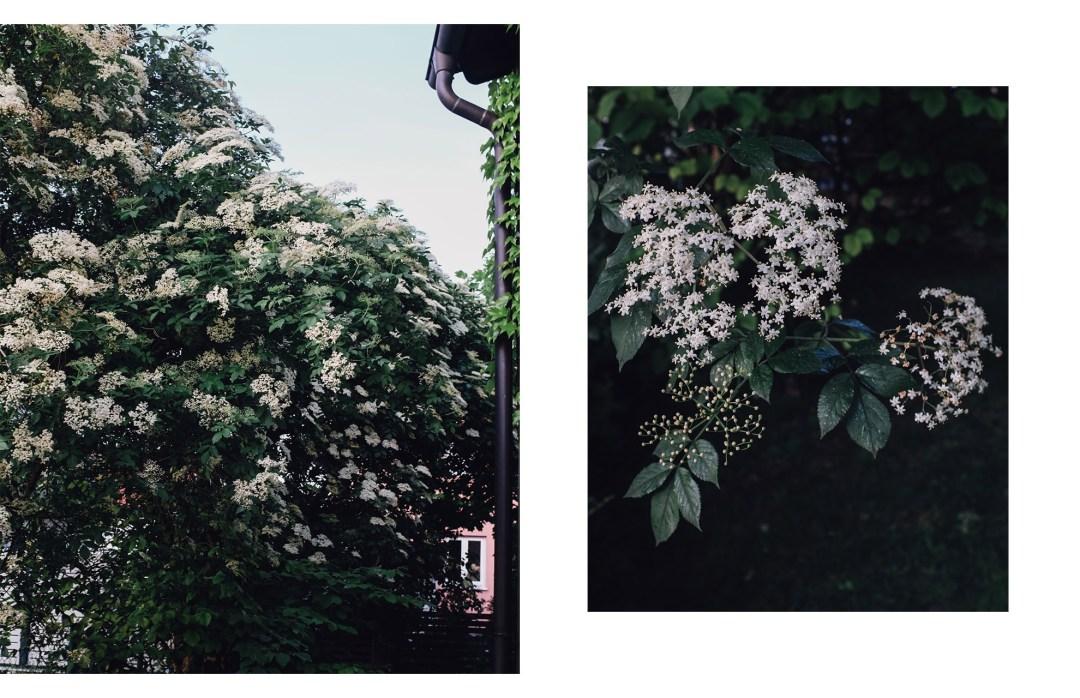 rosen191