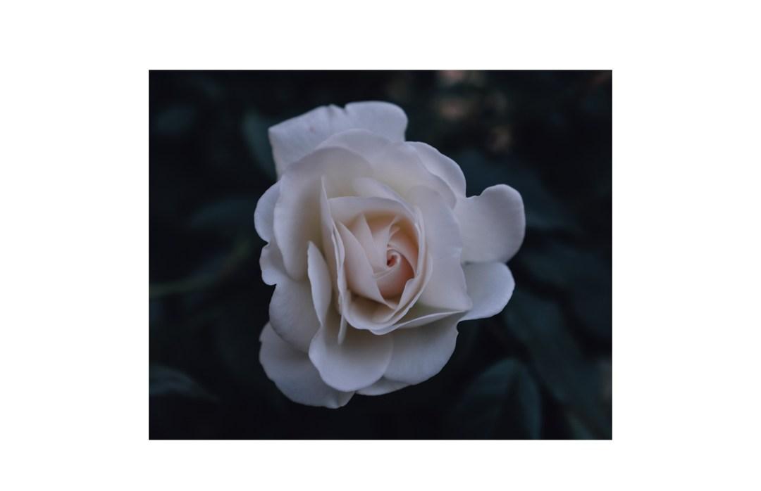 rosen196