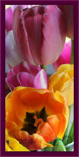 A Boquet of Tulips
