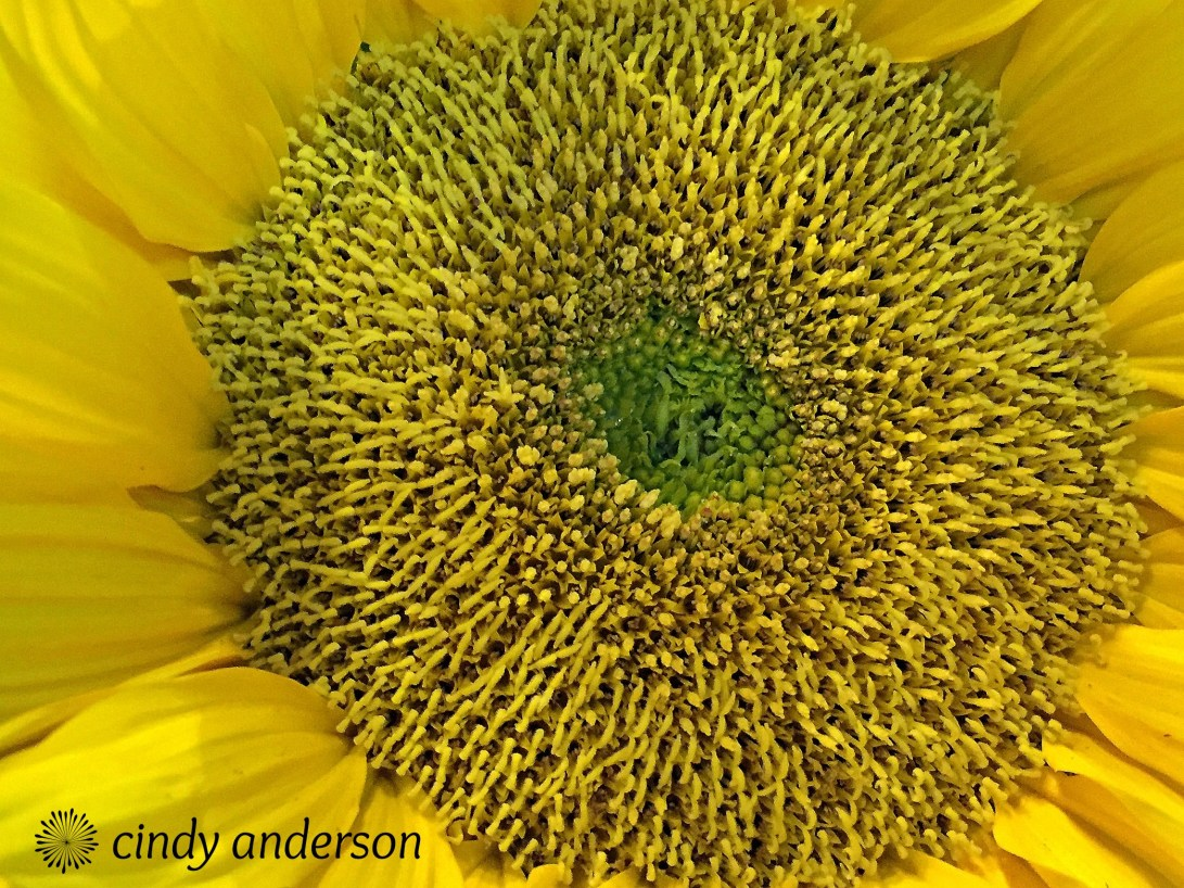 blooming_sunshine