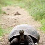 Slow and Steady Wins the Race…There are No Quick Fixes with Wellness