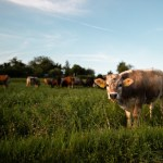 Grass Fed and Free Range: What Does it Mean and Why Should You Care?
