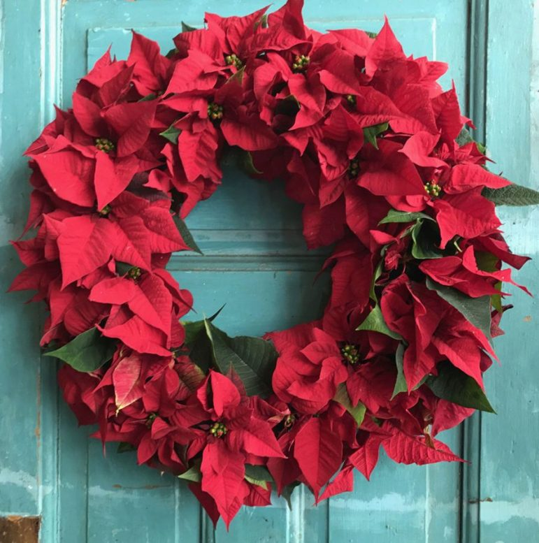 Julblomma i vacker krans. Fina nya dekorationsidéer med vår julblomma alias julstjärna. Gör en krans, bordsdekoration eller varför inte en blomma i håret. Läs hela blogginlägget!