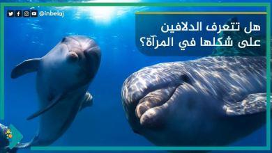 صورة هل تتعرف الدلافين على نفسها في المرآة؟