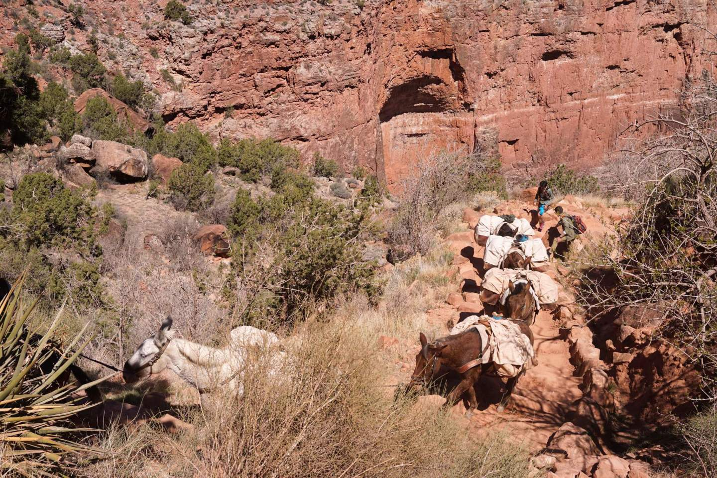 Hiking Bright Angel Trail in Grand Canyon 6