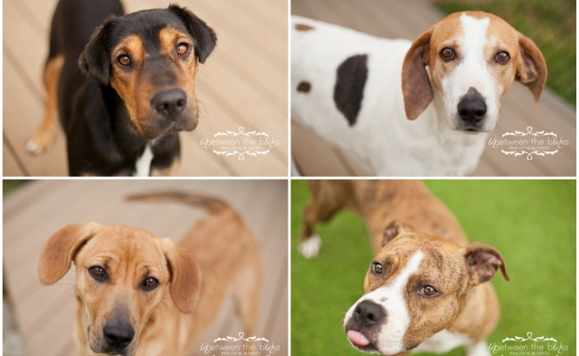 Dogs For Adoption At The Wake County Spca Raleigh Dog Photographer Inbetween The Blinks