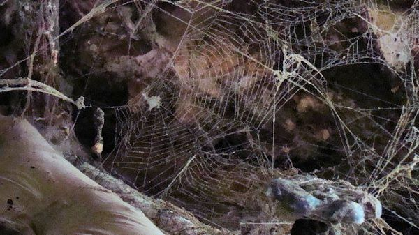 photo of spider webs in barn