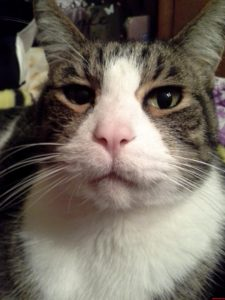 This is my cat's online doppelganger.  Will you just look at that face?