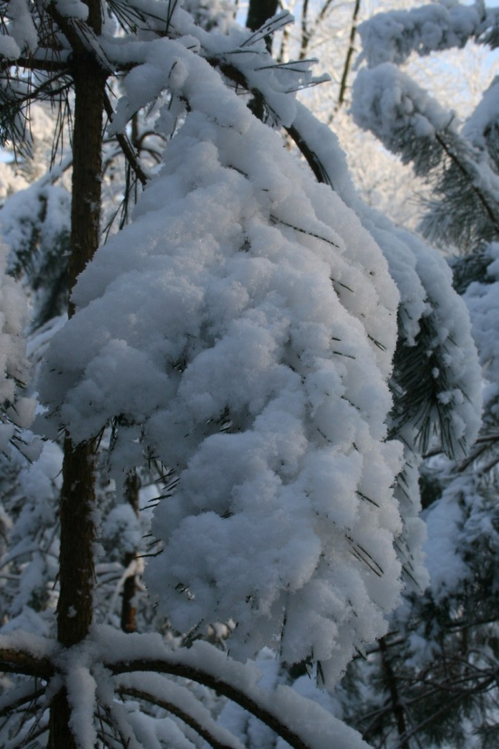 Sneeuw in Mastbos Breda