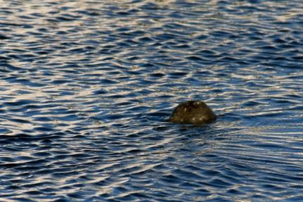 Florida 2010 Sabine 581