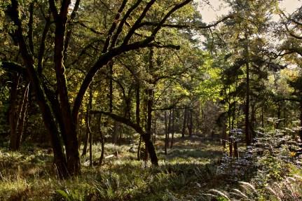 Fall2011 011