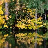 Zunday Zen ... Garden of Reflection