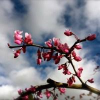 Zunday Zen ... Pretty in Pink