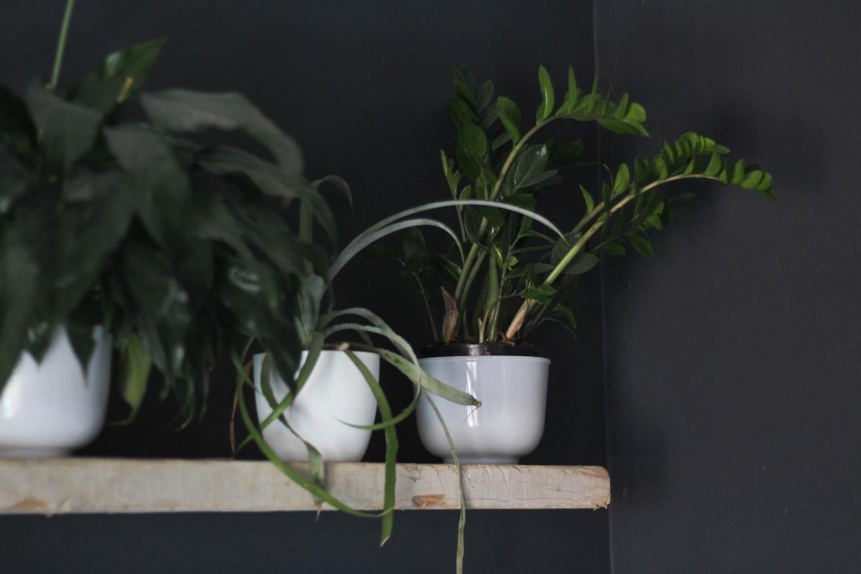 Indoor plants on floating wood shelf