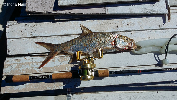 memancing ikan bulan