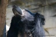 Bärenmütter sind auch nur Menschen