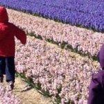 Itinerario in Olanda con bambini: a zonzo tra mulini a vento e tulipani