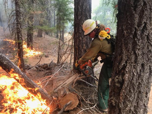 A firefighter with a chain saw cuts a log on the edge of an active wildfire.