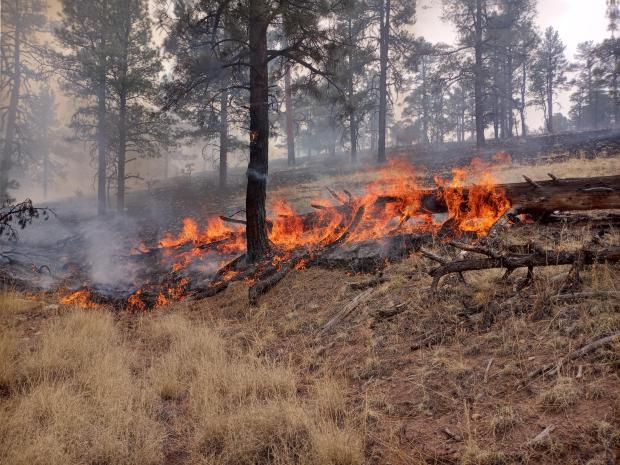 Interior fire activity showing large fuels consumption
