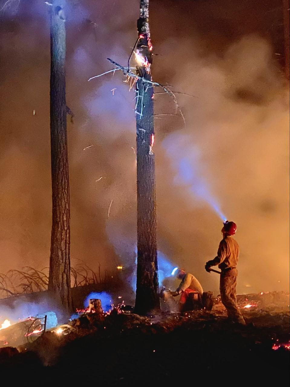 A feller and a lookout work together to bring down a tree on fire, on the contingency line at the Cougar Peak Fire.