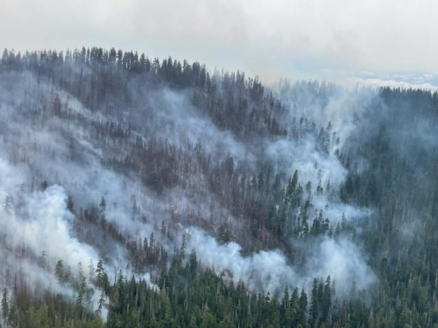 Burned area on slope with fires edge creeping downhill