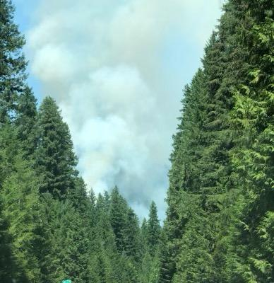 A smoke column rises between tall conifer trees as seen from a highway.