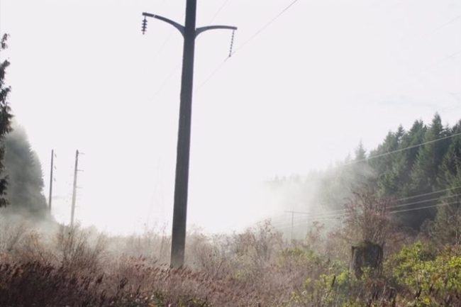 Power lines in the mist