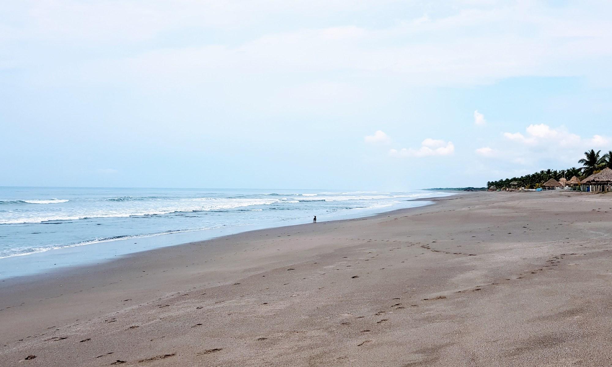 Un perro en una playa