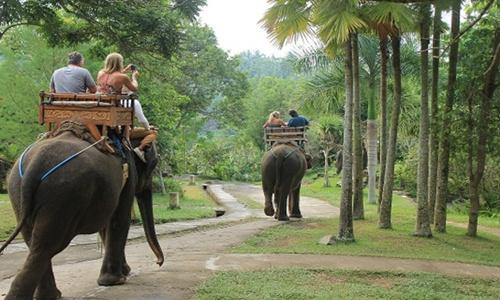 Bali Elephant Ride and ATV Adventure Tour
