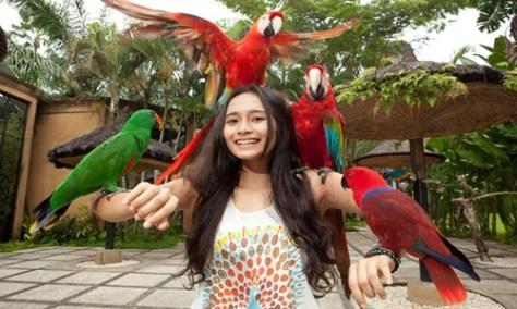 Bali Bird Park and Ubud Tour