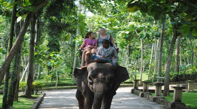 Bali Elephant Ride and Swing