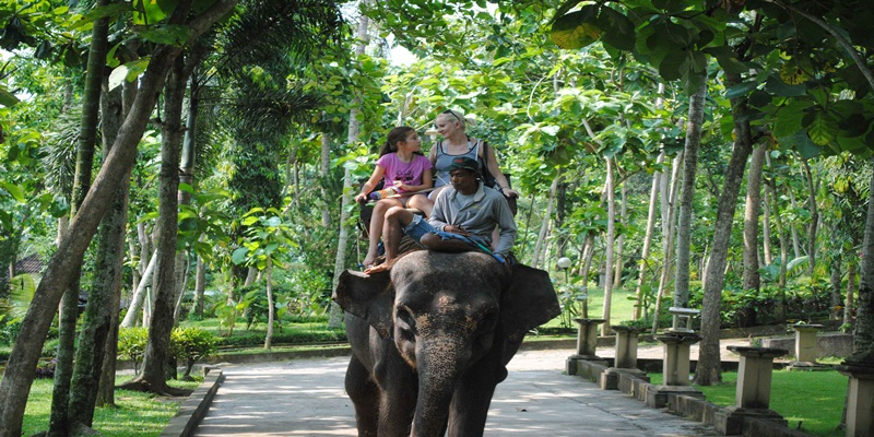 Bali Swing and Elephant Ride