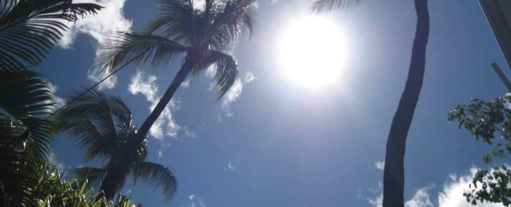 sun and palm tree