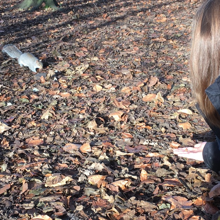 Squirrel in the autumn woods sensory story