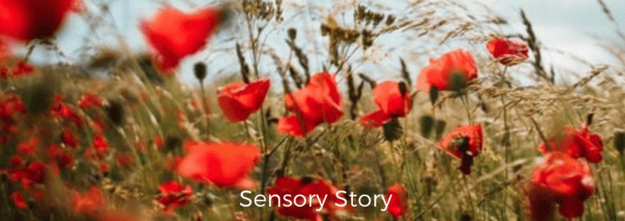 remembrance day sensory story