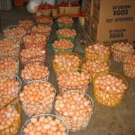 How To Start Eggs Supply Business