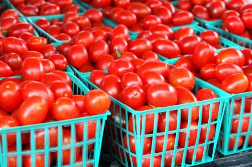 How To Start Lucrative Tomato Farming In Nigeria