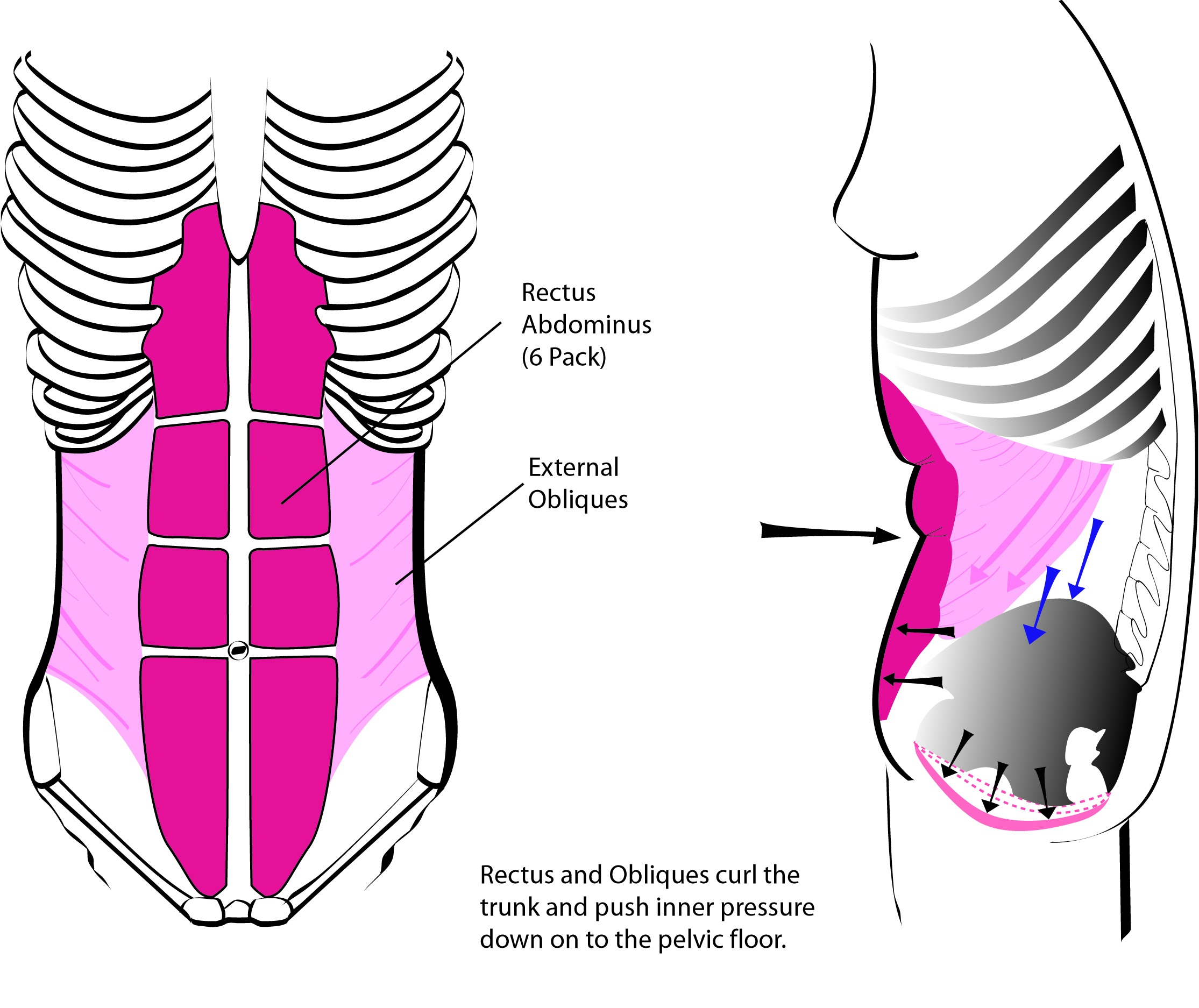 gynecology uterus diagram 2005 pt cruiser stereo wiring pubococcygeus muscle healthy solutions