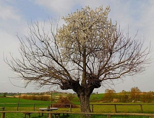 copac-dublu