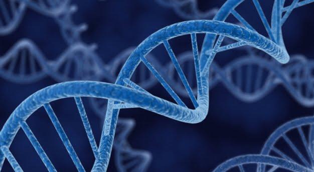 Viata dupa moarte - Gene active